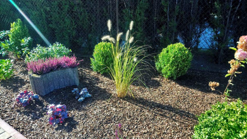 ogród od frontu